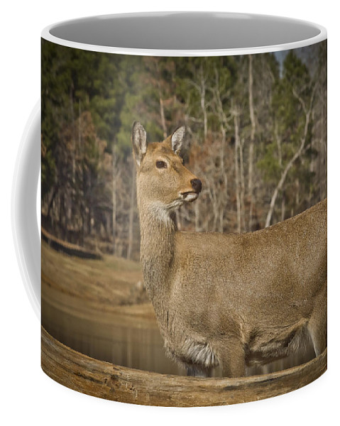 Wildlife Coffee Mug featuring the photograph Down By The Duck Pond by Kim Henderson