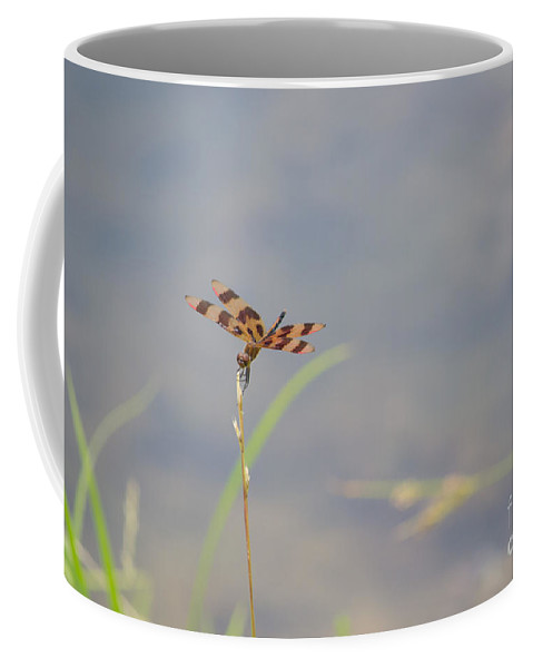 Dragon Coffee Mug featuring the photograph Dragon Fly 4 by Scott Hervieux