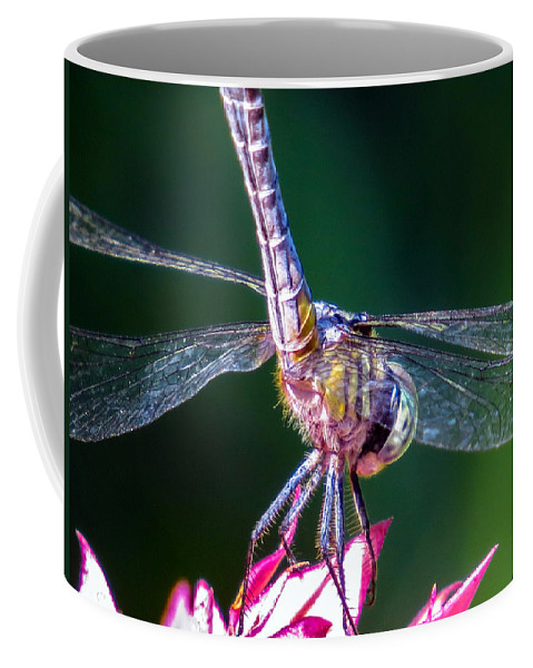 Dragonfly Coffee Mug featuring the photograph Dragonfly Close Up by Zina Stromberg