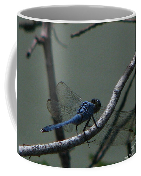 Art For The Wall...patzer Photography Coffee Mug featuring the photograph Dragonfly by Greg Patzer
