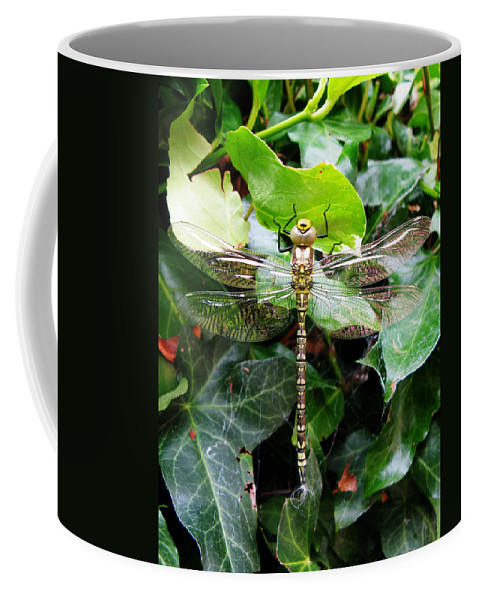Dragonfly Coffee Mug featuring the photograph Dragonfly In An English Garden by Tom Conway