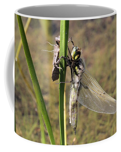 Four-spotted Skimmer Coffee Mug featuring the photograph Dragonfly Newly Emerged - Second In Series by Doris Potter
