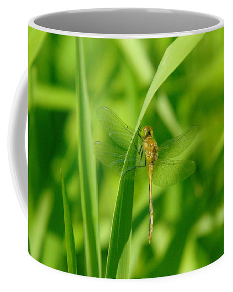 Insects Coffee Mug featuring the photograph Dragonfly On A Grass Stem by Jeff Swan