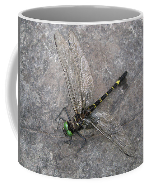 Dragonfly Coffee Mug featuring the photograph Dragonfly On Rock by David Mayeau
