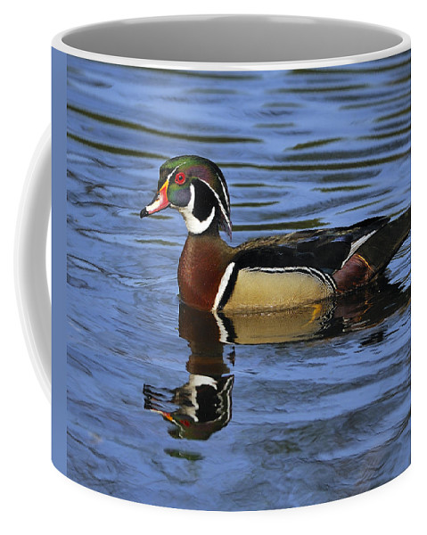 Wood Duck Coffee Mug featuring the photograph Drake Wood Duck by Tony Beck