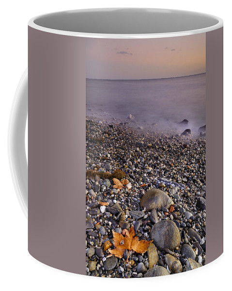 Seascape Coffee Mug featuring the photograph Dried Leaves Of The Sea by Guido Montanes Castillo