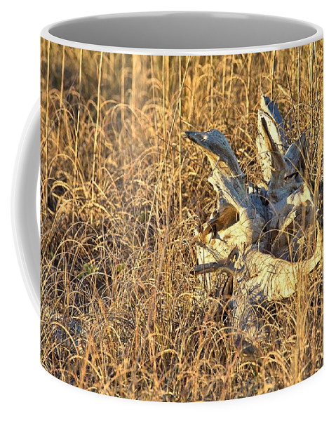 9685 Coffee Mug featuring the photograph Driftwood by Gordon Elwell