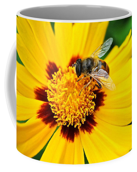 Queen Coffee Mug featuring the photograph Drone Bee by Frozen in Time Fine Art Photography