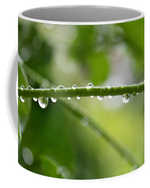Stem Coffee Mug featuring the photograph Drops In Line by Christiane Schulze Art And Photography