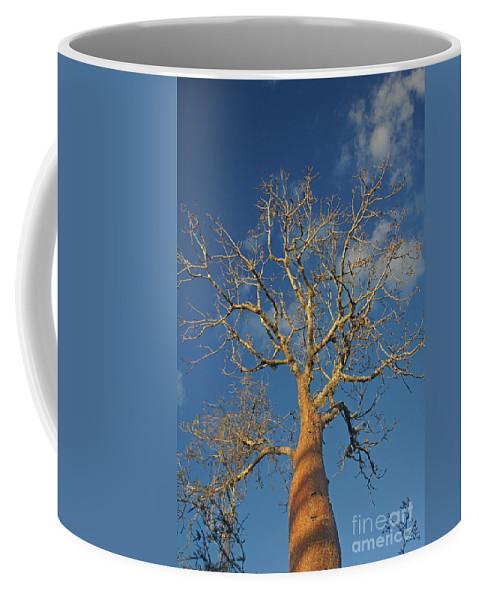 Africa Coffee Mug featuring the photograph dry season in Madagascar by Rudi Prott