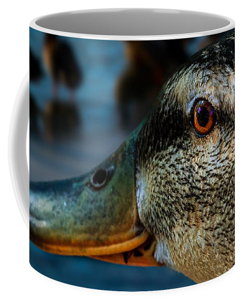 Duck Coffee Mug featuring the photograph Duck Watching Ducks by Bob Orsillo