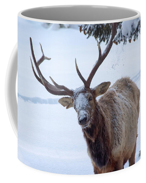 Snow Coffee Mug featuring the photograph Dumped On by Shane Bechler