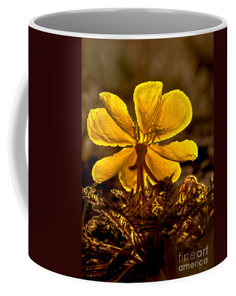 Plants Coffee Mug featuring the photograph Dune Evening Primrose by Robert Bales