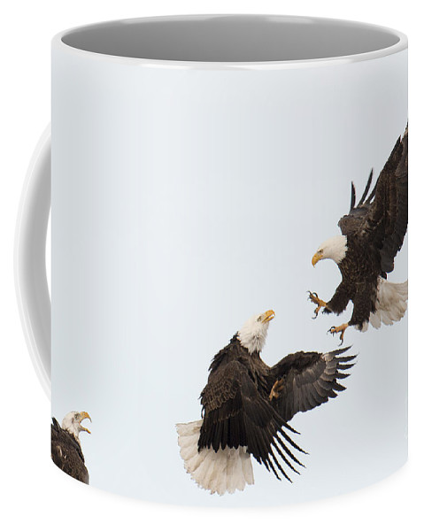 Eagles Coffee Mug featuring the photograph Eagle Fight by Deby Dixon