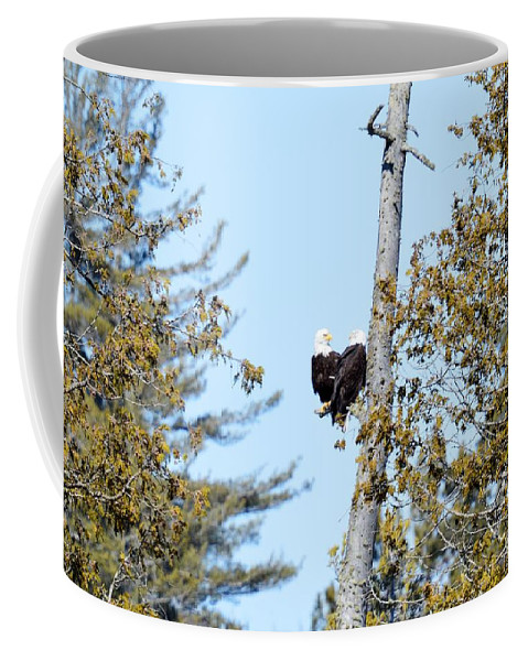 Bald Eagles Coffee Mug featuring the photograph Eagle Heart by Thomas Phillips