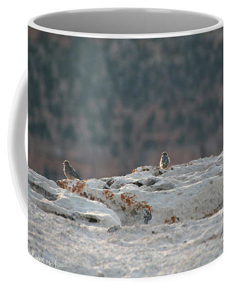 Outdoors Coffee Mug featuring the photograph Early Birds On The Edge by Susan Herber
