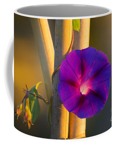 Morning Coffee Mug featuring the photograph Early Bloomer by Joe Geraci