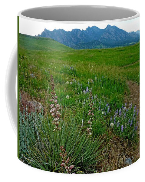 Nature Photography Coffee Mug featuring the photograph Early Summer Walk by George Tuffy