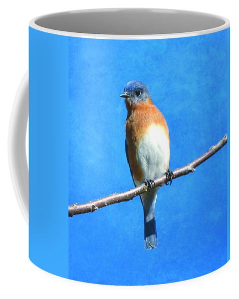 Bird Coffee Mug featuring the photograph Eastern Bluebird II by Deena Stoddard