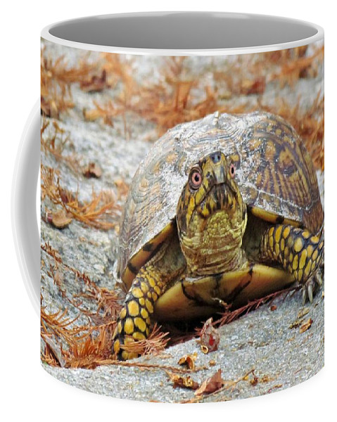 Box Turtle Coffee Mug featuring the photograph Eastern Box Turtle by Cynthia Guinn