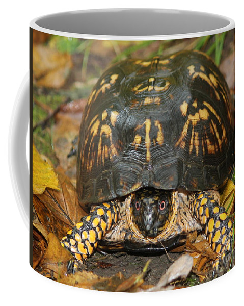 Turtle Coffee Mug featuring the photograph Eastern Box Turtle by Maxine Kamin