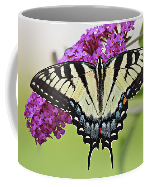 Eastern Coffee Mug featuring the photograph Eastern Swallowtail by Marcia Colelli