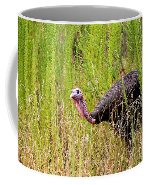 Bird Coffee Mug featuring the photograph Eastern Wild Turkey - Longbeard by Travis Truelove