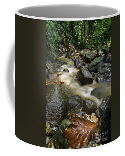 Caribbean Coffee Mug featuring the photograph Edmond Forest Reserve On Saint Lucia by Dave Welling