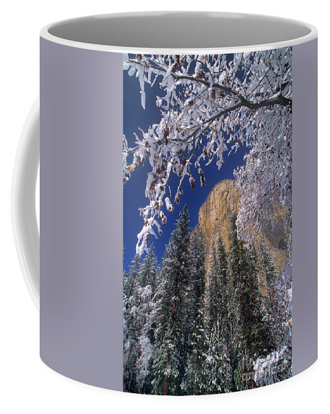 America Coffee Mug featuring the photograph El Capitan Framed By Snow Covered Black Oaks California by Dave Welling