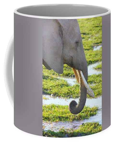 Elephants Coffee Mug featuring the photograph Elephant by Amanda Stadther