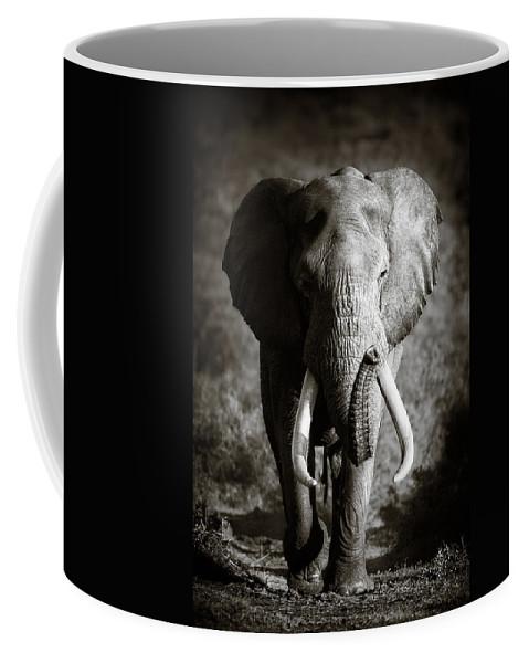 Elephant Coffee Mug featuring the photograph Elephant Bull by Johan Swanepoel