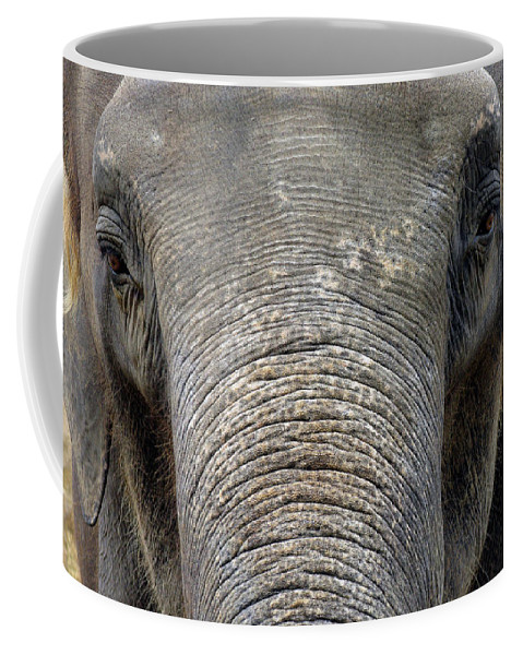 Elephant Coffee Mug featuring the photograph Elephant Close Up 1 by Tom Conway