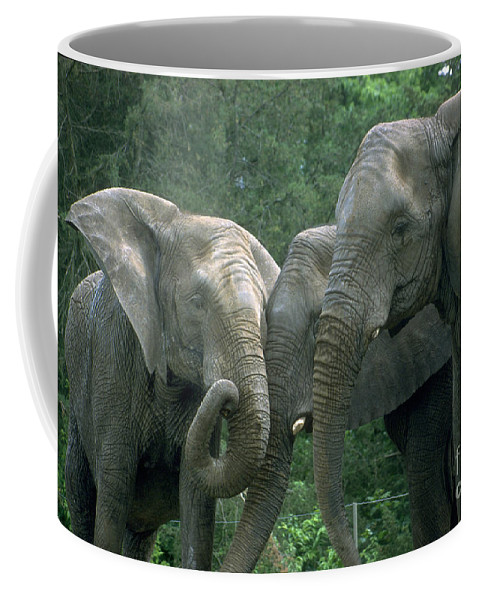 Elaphant Coffee Mug featuring the photograph Elephant Ladies by Gary Gingrich Galleries