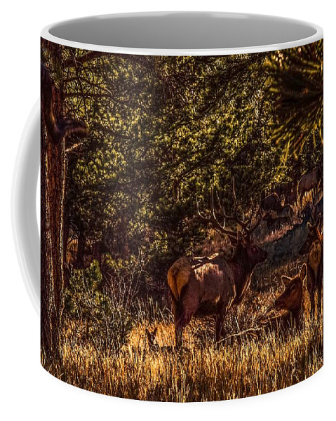 Wilderness Coffee Mug featuring the photograph Elk Herd by Jesse Post