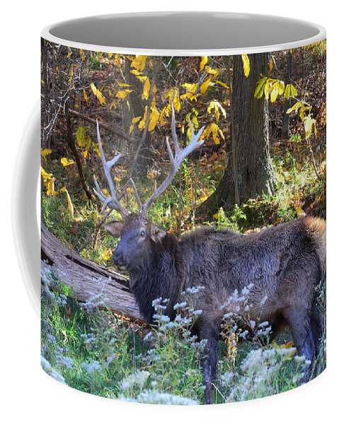 Landscape Coffee Mug featuring the photograph Elk In Autumn Meadow by Peggy Franz