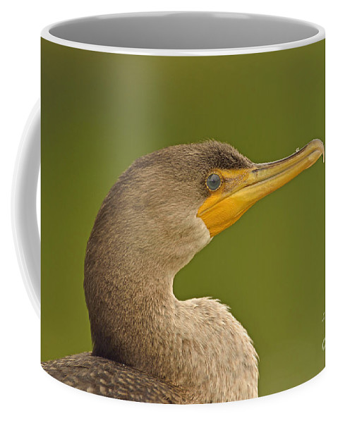 Double-crested Cormorant Coffee Mug featuring the photograph Emerald Eye by Joshua McCullough