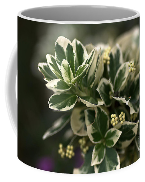 Variegated Leaves Coffee Mug featuring the photograph Emerald Gaiety by Joy Watson