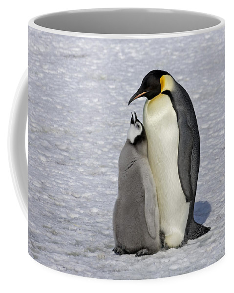 Flpa Coffee Mug featuring the photograph Emperor Penguin And Chick Snow Hill Isl by Roger Tidman