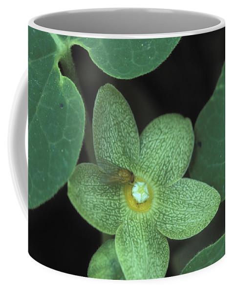Altamaha Coffee Mug featuring the photograph Endangered Flora by Peter Essick
