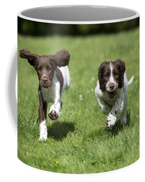 Dog Coffee Mug featuring the photograph English Springer Spaniel Puppies by John Daniels