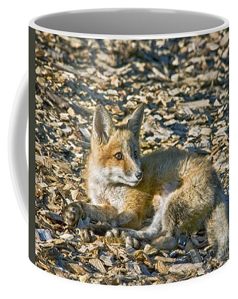 Fox Coffee Mug featuring the photograph Enjoying The Sun by Claudia Kuhn