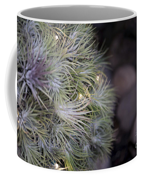 Plant Decoration Coffee Mug featuring the photograph Epiphyte Globe by Terri Winkler