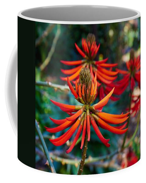 Atlantic Ocean Coffee Mug featuring the photograph Erythrina Speciosa by Jouko Lehto