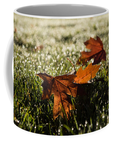 Georgia Mizuleva Coffee Mug featuring the photograph Essence Of Autumn by Georgia Mizuleva