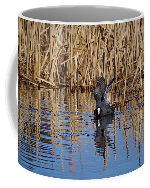 Eurasian Coot Coffee Mug featuring the photograph Eurasian Coot And The Bubles by Jouko Lehto