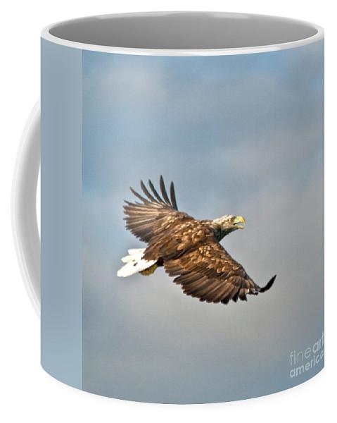 White_tailed Eagle Coffee Mug featuring the photograph European Flying Sea Eagle 3 by Heiko Koehrer-Wagner