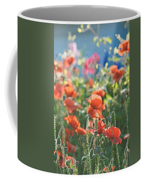 Poppies Coffee Mug featuring the photograph Evening Lights The Poppies by Lisa Knechtel