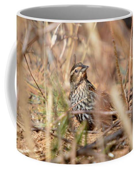 Red-winged Blackbird Coffee Mug featuring the photograph Ever Attentive by Thomas Phillips