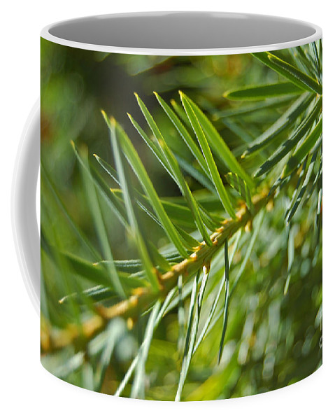First Star Art By Jrr Coffee Mug featuring the photograph Evergreen Dream By Jrr by First Star Art