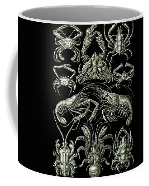 Crustacean Coffee Mug featuring the painting Examples Of Decapoda Kunstformen Der Natur by Ernst Haeckel
